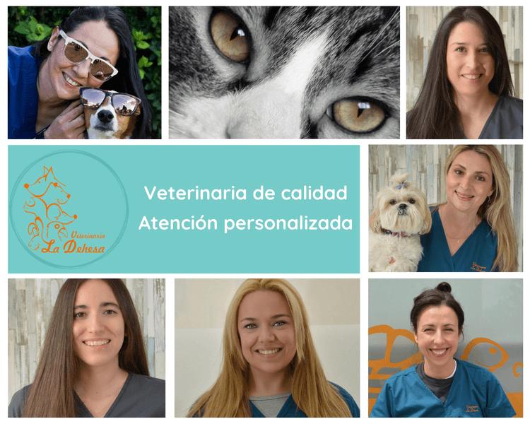 El equipo al completo del mejor veterinario de San Sebastián de los Reyes