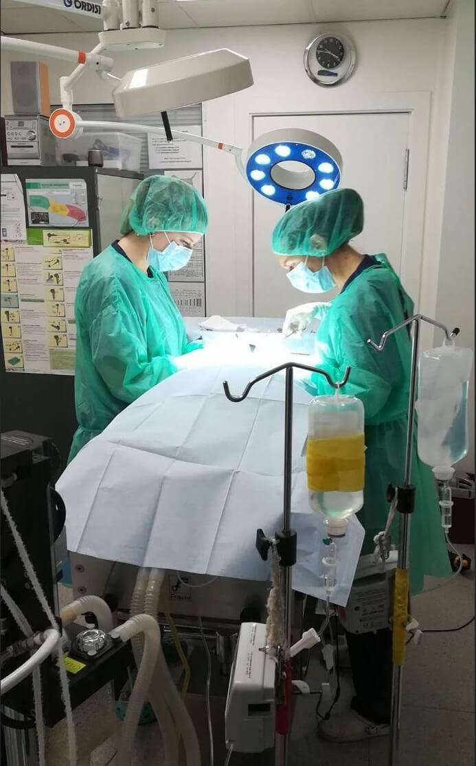 El mejor veterinario de Lleida operando en el quirófano junto a su equipo